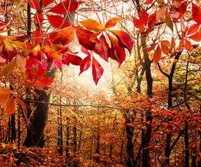 Herbst: Mystischer Wald