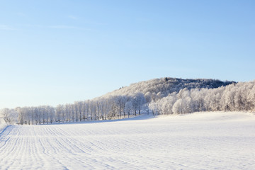 Fields and forest in winter landscapes