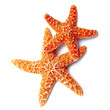 stelle marine in fondo bianco - 57360948