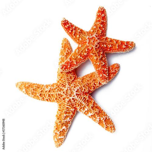 Leinwanddruck Bild stelle marine in fondo bianco