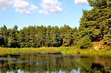 forest and lake scenery