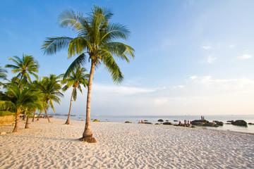 coconut tree on the huahin beach Thailand