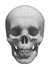 3d White skull wireframe isolated on white