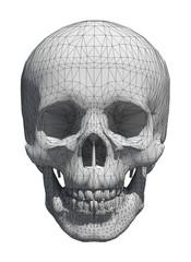 3d White skull wireframe isolated on white