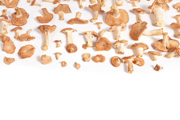 Wild Mushroom Background