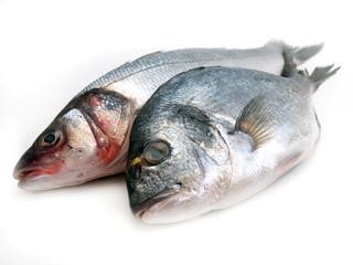 Fish seabass and dorado