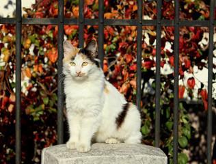 Mačka stoji na ogradi