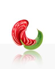 fiore rosso con foglia verde