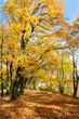 Jesien na drzewach