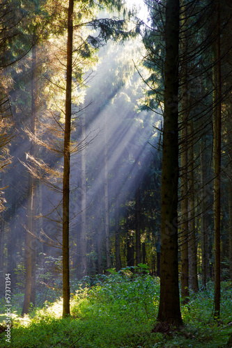 Sun rays in mysterious forest