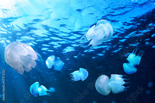 Jellyfishes floating in blue water, Black Sea