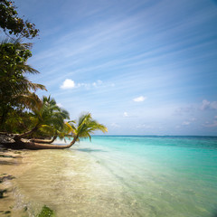 Untouched tropical beach in Maldives