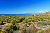 Mediterranean flora - Sardinia
