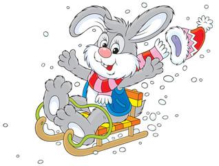Merry grey bunny sledding