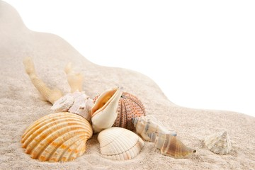 Shells, Coral and Dried Sea Urchins on the sand as background