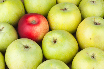 Red apple among green apples lying on sackcloth