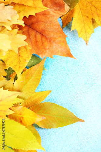 Bright autumn leafs on blue wooden table