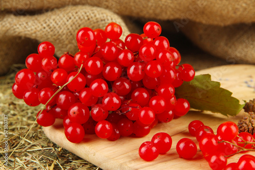Red berries of viburnum