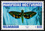 Postage stamp Nicaragua 1983 Xilophanes Chiron, Nocturnal Moth poster