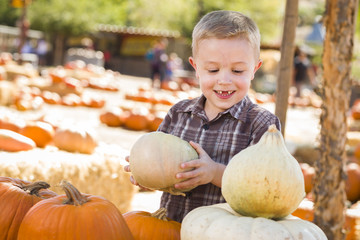 Little Boy Gathering His Pumpkins at a Pumpkin Patch.