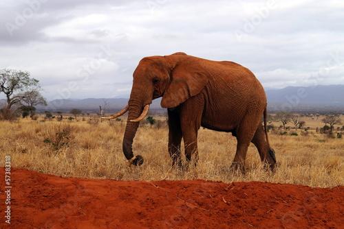 Fototapeten,11,large,huge,bull