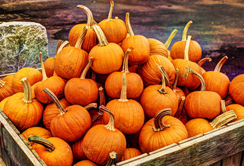 Crate of Punpkins