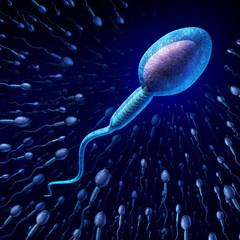 Human Sperm Cell