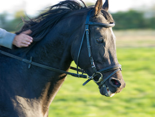 Close up of horse in gallop with rewarding hand
