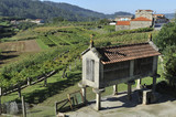 galicia typical rural landscape with barn and vineyards