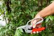Man hand cutting tree branch