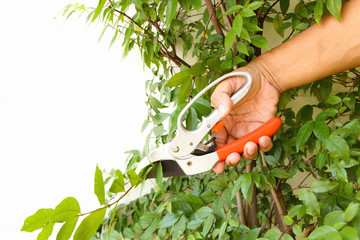 Man hand cutting tree branch