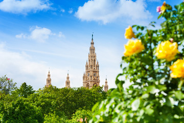 Rathaus among roses