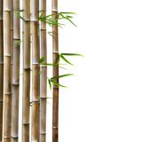 Fototapety Bambus