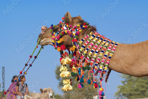 Decoration of camel