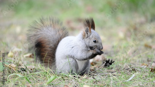 Squirrel eating seeds in the forest