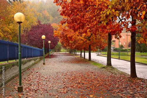 Autumnal trees along sidewalk in Alba, Italy.
