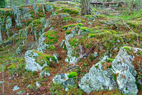 Forest landscape with stones and moss in fall.