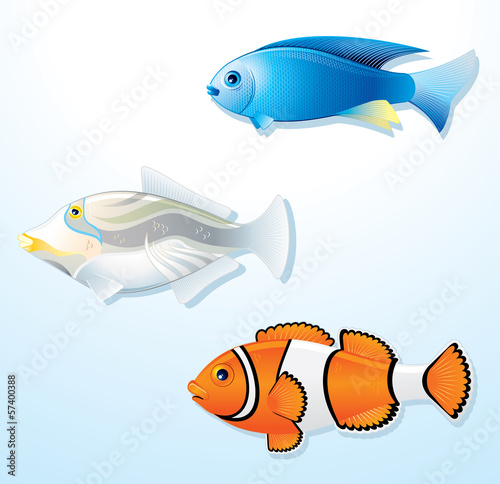 Exotic Tropical Fishes