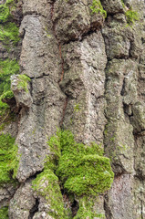 Texture moss on a tree