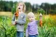 Adorable little girls picking carrots