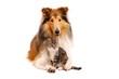 canvas print picture - Hund und Katze