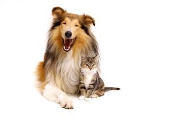 Hund und Katzenbaby sitzend