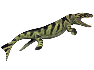 Dakosaurus Profile