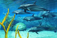 Les dauphins rayés