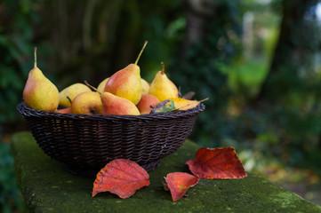 Ein Korb voller Birnen im Herbst