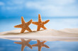 starfish  with ocean , beach, seascape and reflection