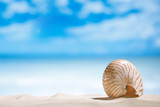Fototapety nautilus shell  with ocean , beach and seascape, shallow dof