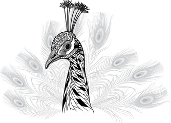 Peacock bird head as symbol for mascot or emblem design