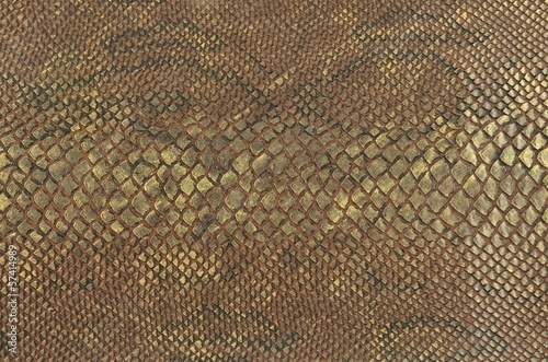 colour snake skin texture background