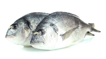 Dorado fish isolated on white